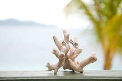 Deux boucles de mariage sur le corail devant le bord de la mer Photographie stock libre de droits