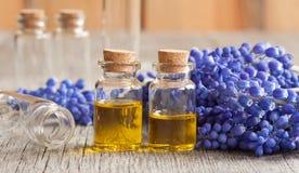 Deux bouteilles d'huile essentielle avec les fleurs bleues Photos stock