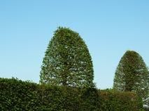 Deux buissons verts Photos stock