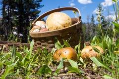 Deux cèpes (boletus edulis) et panier avec des champignons dans l'avant Photos stock