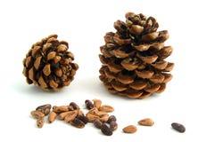 Deux cônes avec des graines Images libres de droits
