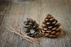 Deux cônes de sapin avec des branches Photo libre de droits