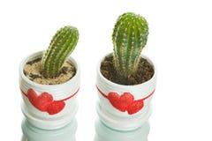 Deux cactus dans les flowerpots avec des formes de coeur Photographie stock libre de droits