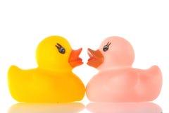Deux canards photos libres de droits