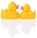 Deux canards drôles en caoutchouc jaunes Image libre de droits