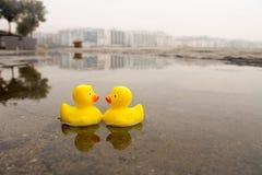 Deux canards en caoutchouc jaunes dans l'eau images libres de droits
