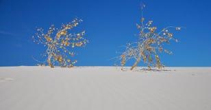 Deux centrales desséchées dans le blanc sable le dessert Images libres de droits