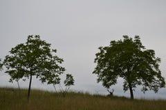 Deux cerfs communs détendant sur l'herbe Image stock