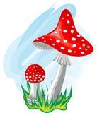 Deux champignons de couche Images libres de droits