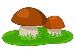 Deux champignons de couche avec l'herbe verte Image stock