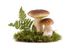 Deux champignons de couche de porcini Photo libre de droits