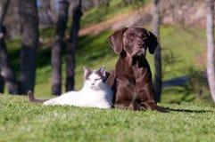 Deux chasseurs animaux grands Images libres de droits