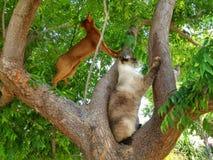Deux chasseurs sur un arbre photographie stock