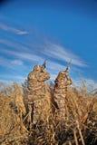 Deux chasseurs tirant des canards le jour ensoleillé image libre de droits