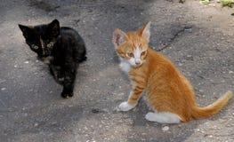 Deux chatons à un naulitsa, sur l'asphalte Photographie stock libre de droits