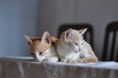 Deux chatons photos stock