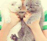 Deux chatons Image stock