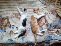 Deux chatons Photographie stock
