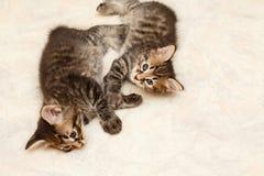 Deux chatons Image libre de droits