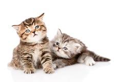 Deux chatons britanniques regardant loin D'isolement sur le fond blanc Images stock