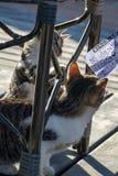 Deux chatons espiègles de chat tigré captivés par le morceau de papier réalisé de bingo-test images libres de droits