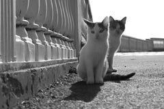 Deux chatons légers se reposent en parc photos stock