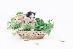 Deux chatons mignons de bébé posant dans le panier complètement des feuilles vertes Image stock