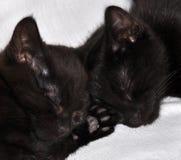 Deux chatons noirs Images libres de droits
