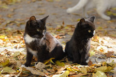 Deux chatons noirs photo stock