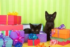 Deux chatons noirs dans des cadeaux d'anniversaire Photographie stock libre de droits