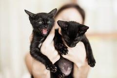 Deux chatons noirs se reposant dans des mains femelles Photos stock