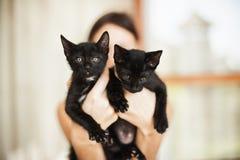 Deux chatons noirs se reposant dans des mains femelles Photographie stock libre de droits
