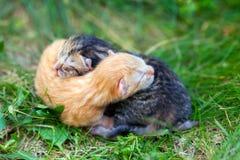 Deux chatons nouveau-nés Photo libre de droits