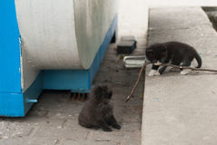 Deux chatons sans abri sur la rue Photo libre de droits