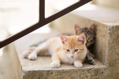 Deux chatons sur des escaliers à la maison Image libre de droits