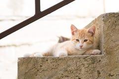 Deux chatons sur des escaliers à la maison Photographie stock