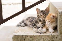Deux chatons sur des escaliers à la maison Photo libre de droits
