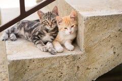 Deux chatons sur des escaliers à la maison Images stock