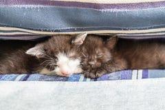 Deux chatons sur un divan bleu photo stock