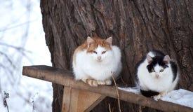 Deux chats Photo stock