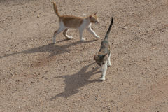 Deux chats images stock