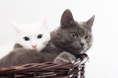 Deux chats Photo stock