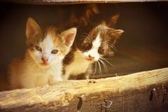 Deux chats Photo libre de droits