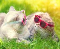 Deux chats avec des lunettes de soleil se trouvant sur l'herbe Photos stock
