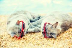 Deux chats détendant sur la plage Photo stock