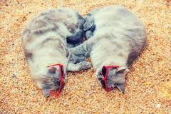 Deux chats détendant sur la plage Photo libre de droits