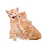 Deux chats dans l'amour Photo libre de droits