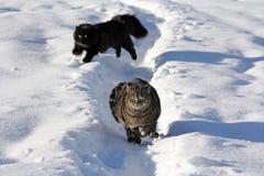Deux chats dans la neige Image stock