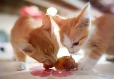 Deux chats de bébé mangeant une jambe de poulet Images libres de droits