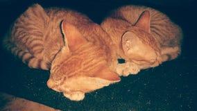 deux chats de gingembre dormant dans la pose adorable images stock